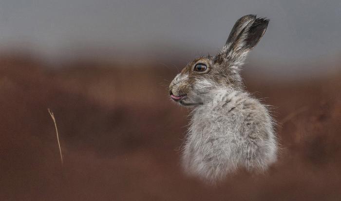 f4c079 National Geographic: лучший фотограф природы года (23 фото)