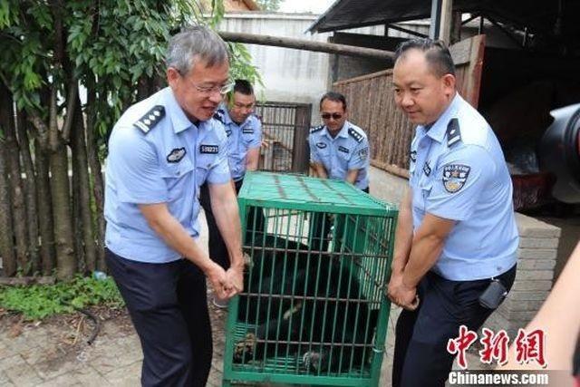 Китаянка два года растила медведя, думая, что это мастиф (4 фото)
