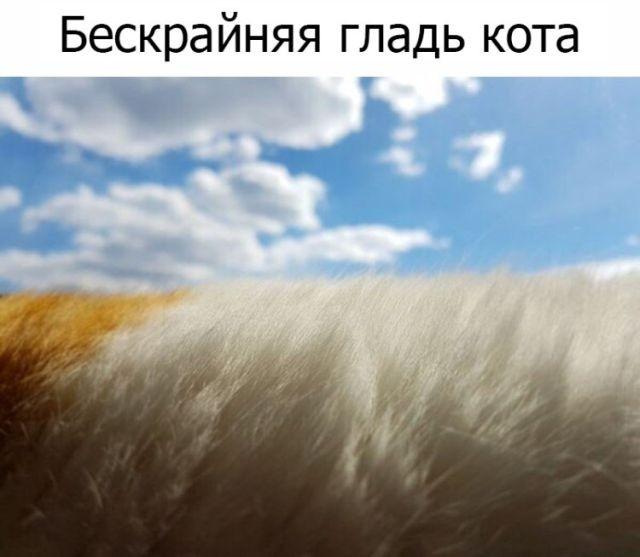 Подборка прикольных фотографий (53 фото)