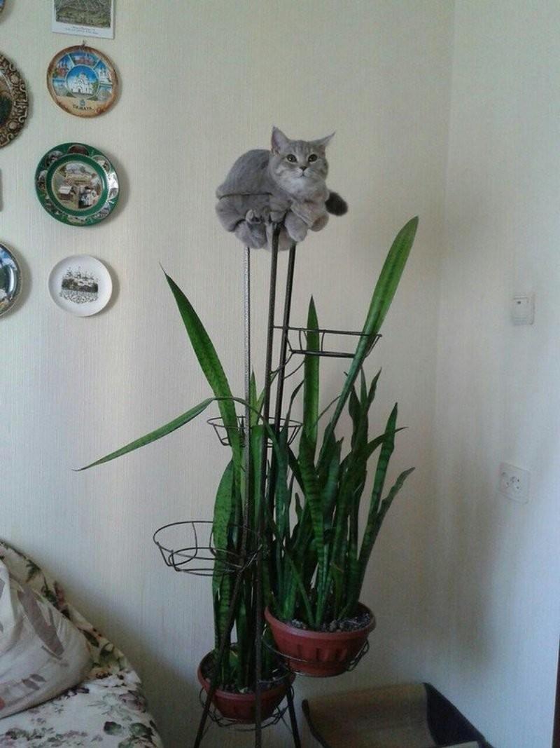 25 котиков, забравшихся в необычные места (26 фото)