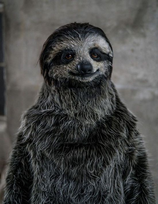 Реалистичный костюм-ленивца (4 фото)
