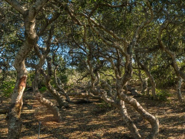Самые жуткие леса планеты (10 фото)