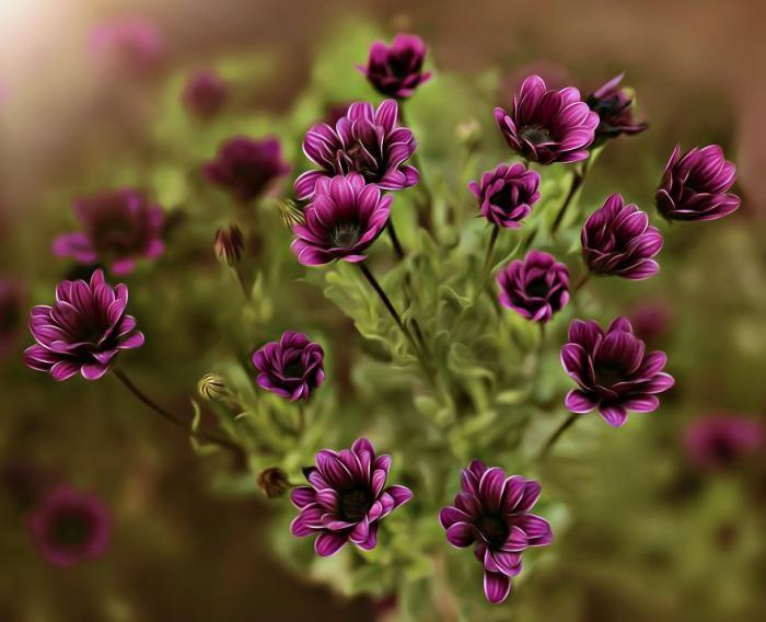 Красота цветов в макрофотографии (9 фото)