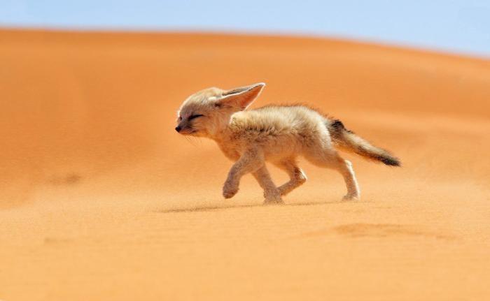 Как Сахара поглощает всю Африку (5 фото)
