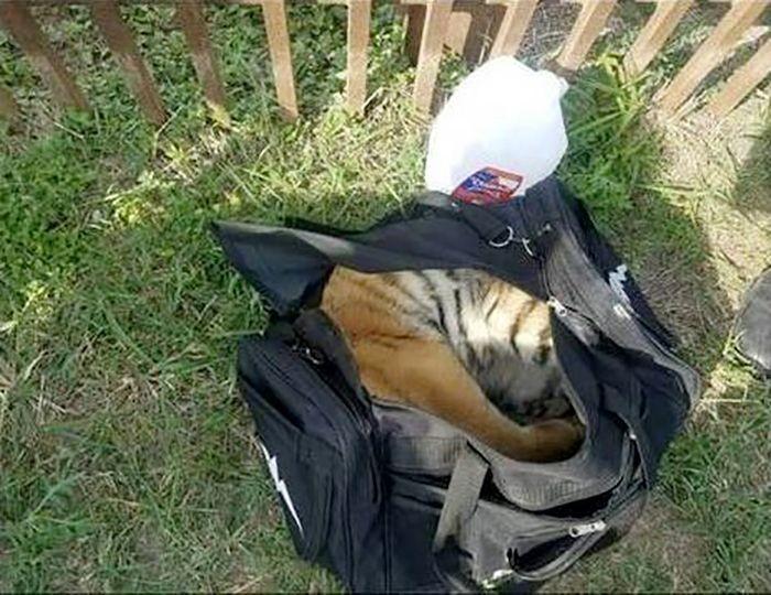 Находка американских пограничников в брошенной сумке (5 фото)