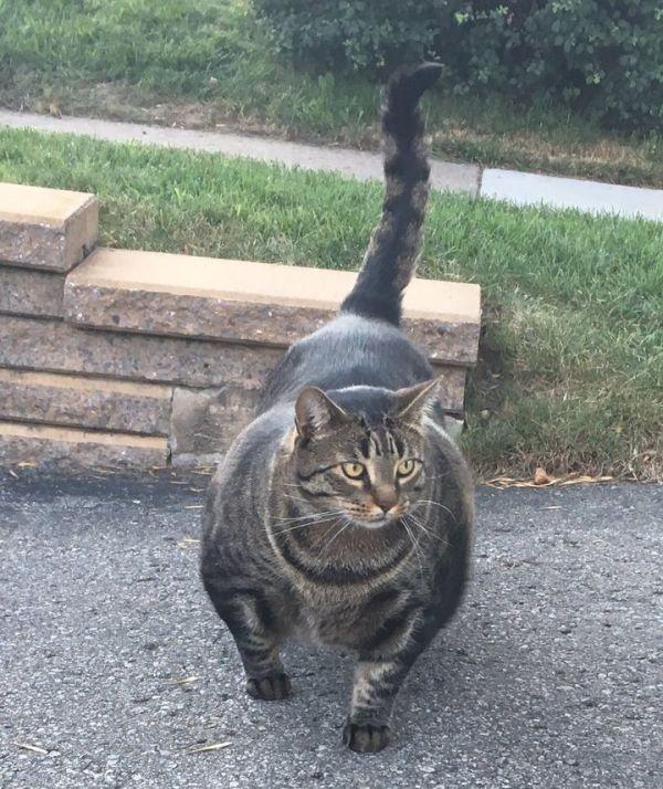«Кот-качок» удивил пользователей сети (4 фото)
