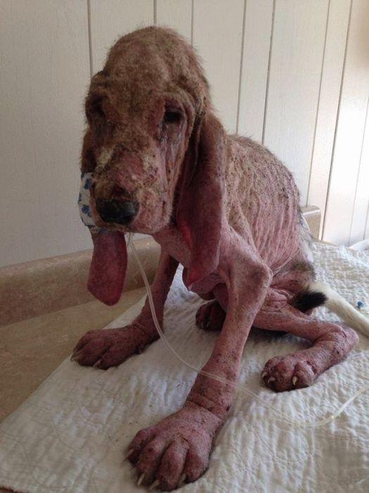 Пара искала щенка в лесу целые сутки, чтобы спасти (17 фото)