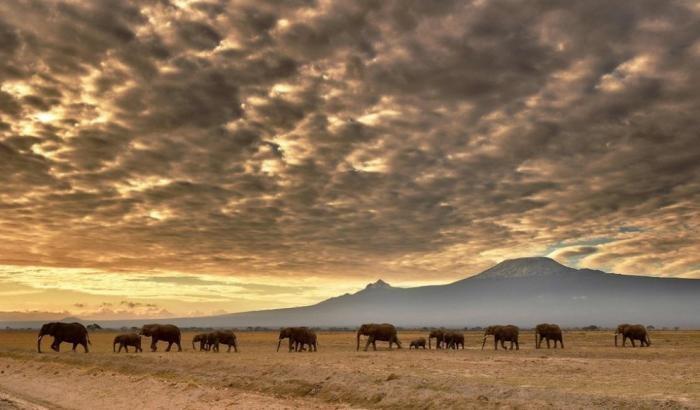 Лучшие фотографии живой природы (20 фото)