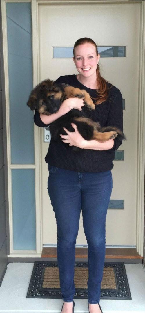 Как быстро вырос этот щенок… (6 фото)