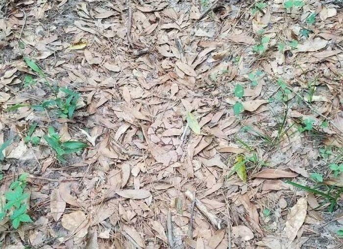 Сможете ли вы увидеть змею на этом фото? (4 фото)