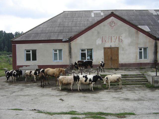 Колоритные фото из деревни (34 фото)