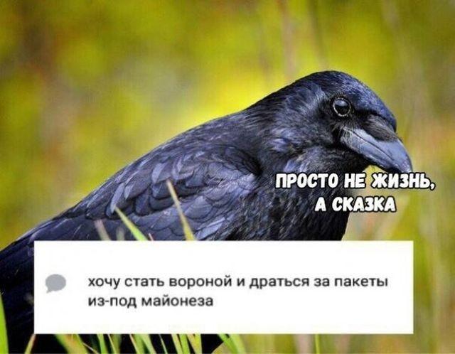 Подборка прикольных фото (55 фото)