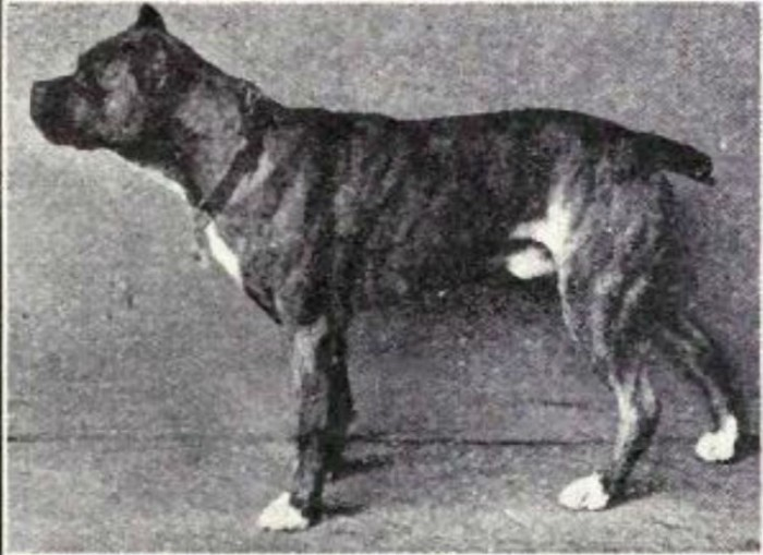 Известные породы собак сейчас и сто лет назад (23 фото)