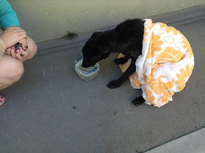 Спасение несчастной собаки в Самаре (4 фото)