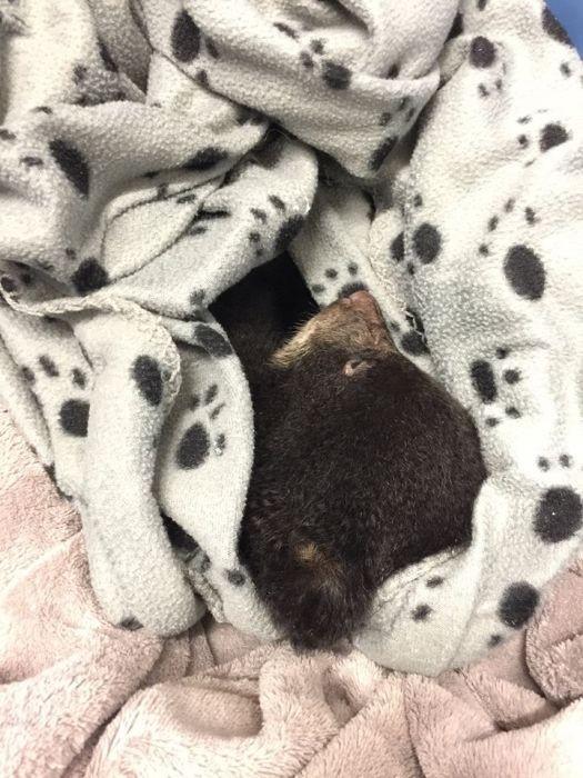 Парень спас медвежонка, рискуя попасть за это в тюрьму (4 фото)