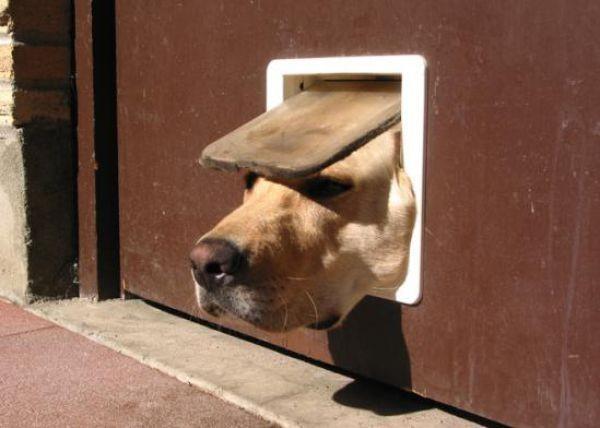 Приколыные кадры с собаками (33 фото)
