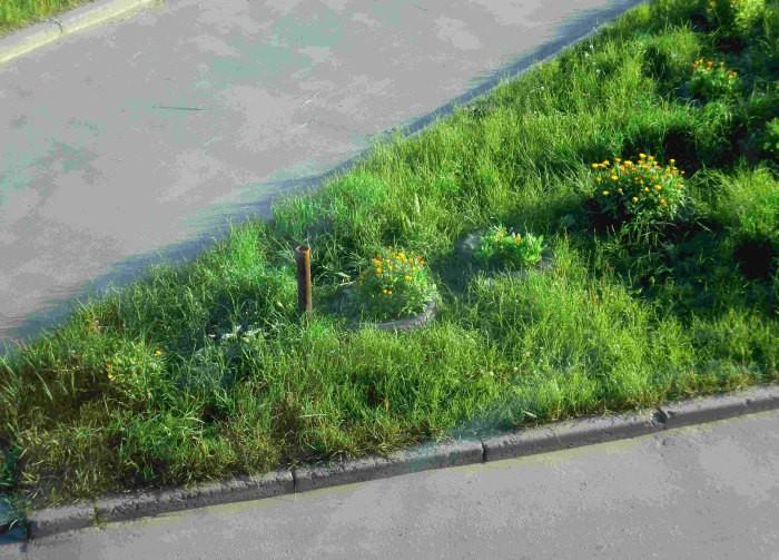 Такую клумбу посадили жильцы для борьбы с парковкой (11 фото)
