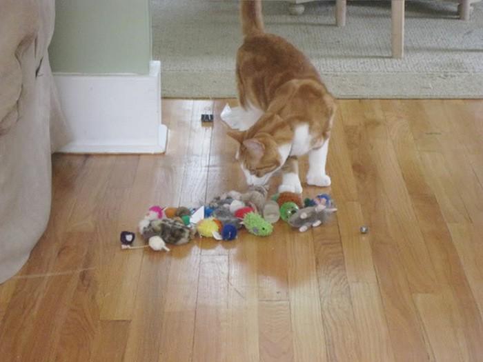 Кошки, которые коллекционируют понравившееся безделушки (21 фото)