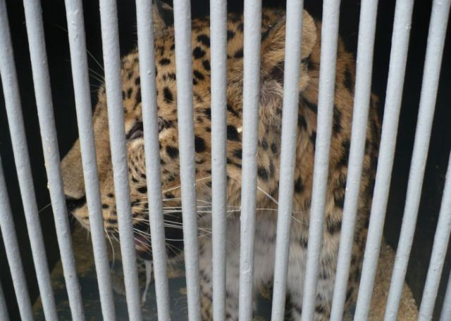 Женщина пыталась нелегально ввезти экзотических животных (5 фото)