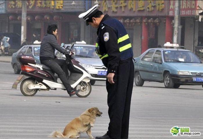 Полицейский и собака (6 фото)