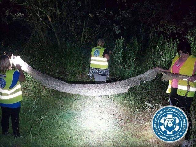 В Варшаве разыскивают голодного пятиметрового питона (8 фото)