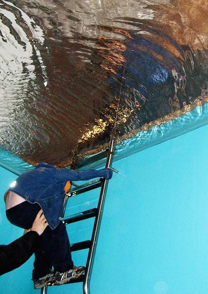 Подводные жители (8 фото)