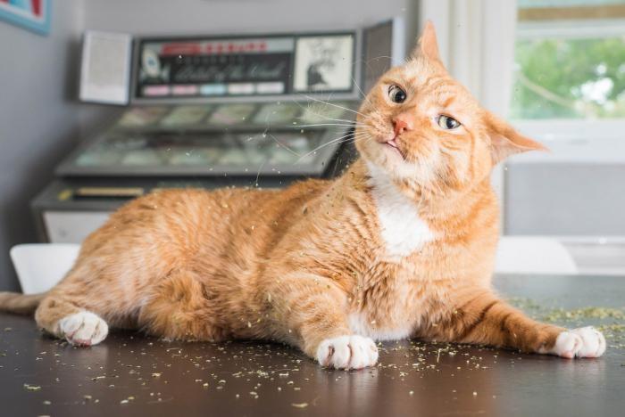 Наркотики для кошек (11 фото)