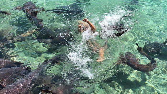 Попытка сделать фотографию с акулами пошла не по плану (5 фото)