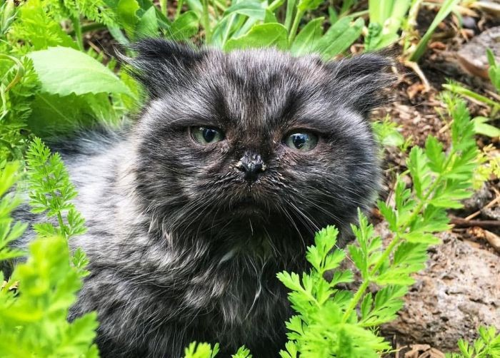 Необычный котенок-карлик, обнаруженный в лесу (6 фото)