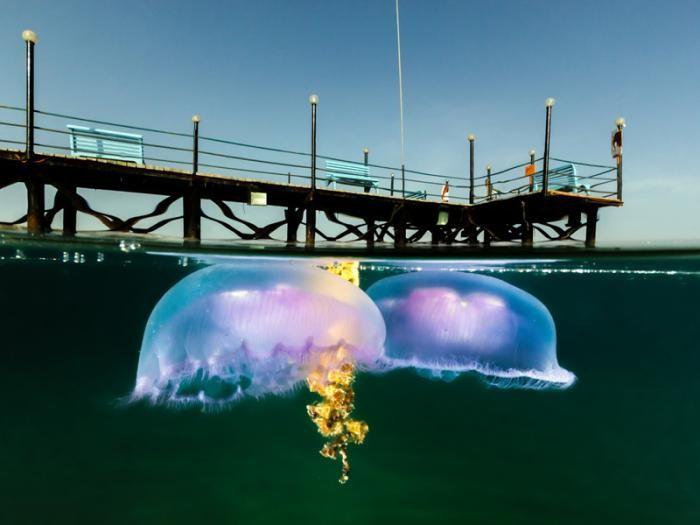 Необычные полуподводные фотографии (10 фото)