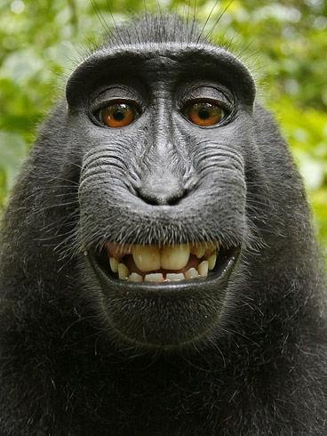 Улыбающаяся обезьяна устроила себе фотосессию (6 фото)