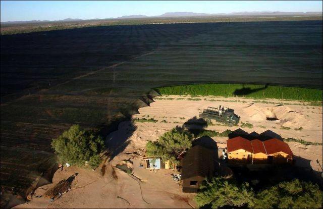 Спрятанная плантация конопли (7 фото)