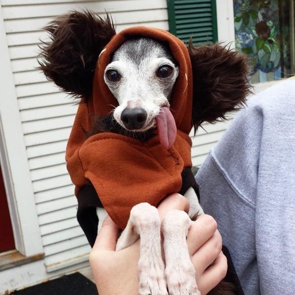 """Собака похожа на ленивца Сида из """"Ледникового периода"""" (17 фото)"""
