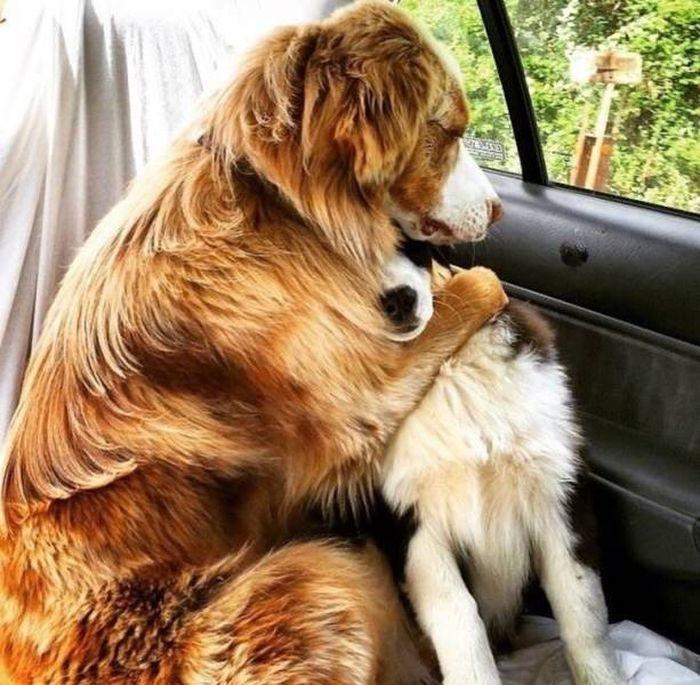 Животные не любят поездки к ветеринару (26 фото)