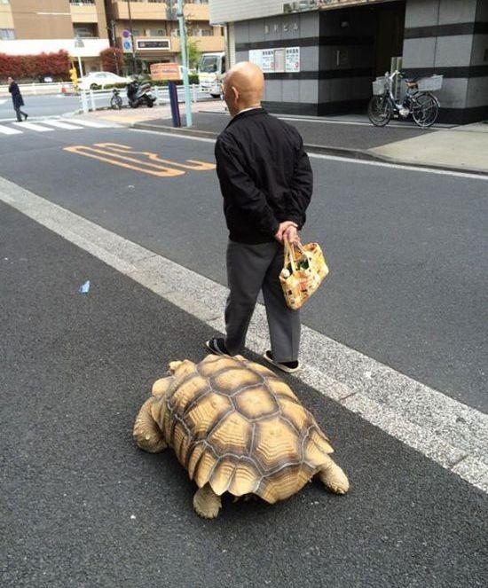 Необычный питомец жителя Токио (4 фото)