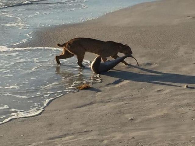 Один из самых редких кадров дикой природы (2 фото)
