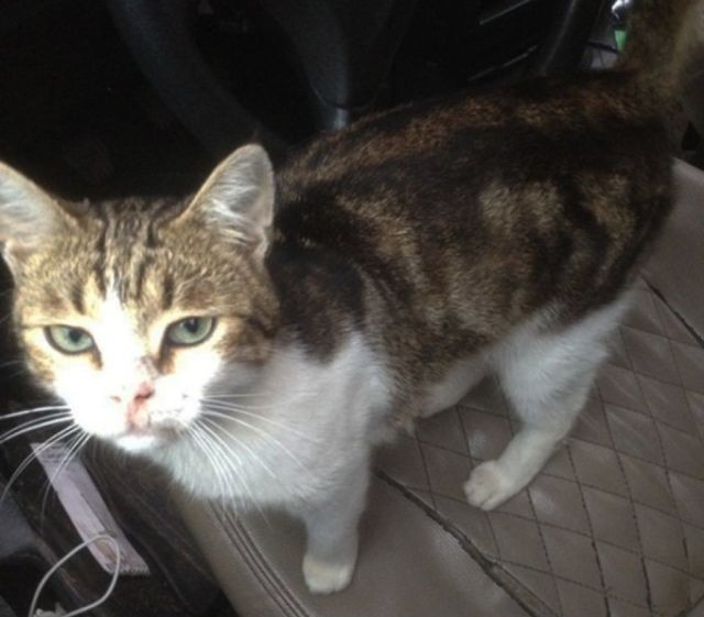 Полиция перехватила кота-наркокурьера (4 фото)
