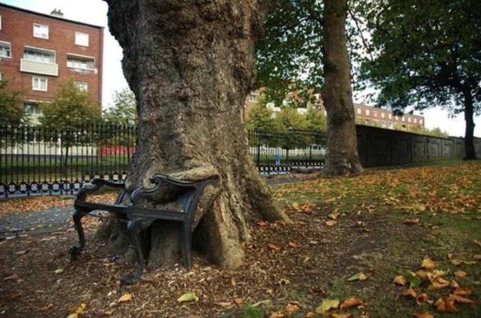 Деревья, которые растут несмотря ни на что (21 фото)