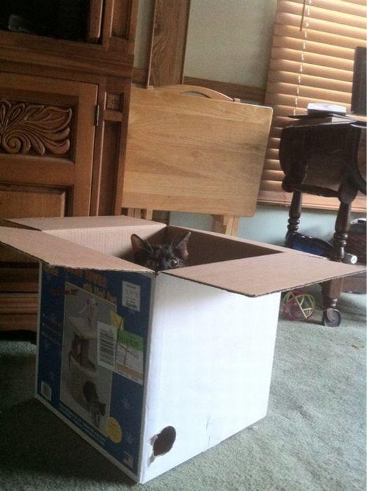 Коты на охоте (20 фото)