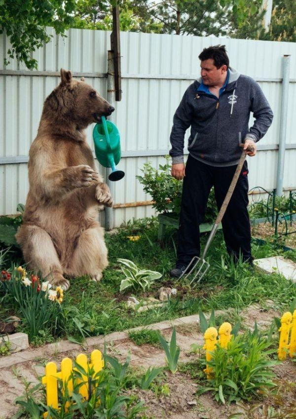 Медведь Степан, который уже 20 лет живет в семье (7 фото)