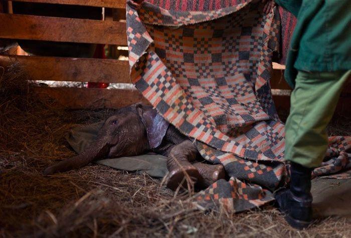 Детский дом для слонов в Кении (18 фото)
