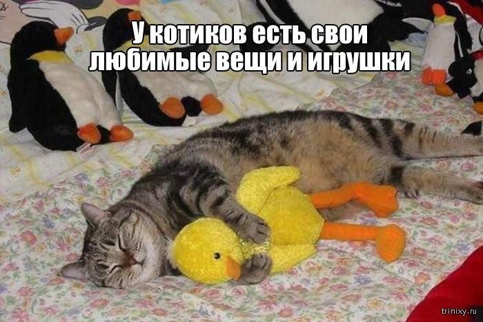 Вещи, которые до боли знакомы всем кошатникам (20 фото)