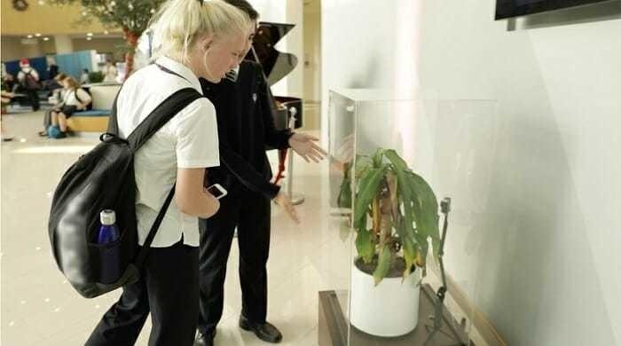 Чего можно добиться, оскорбляя растение - эксперимент (5 фото)