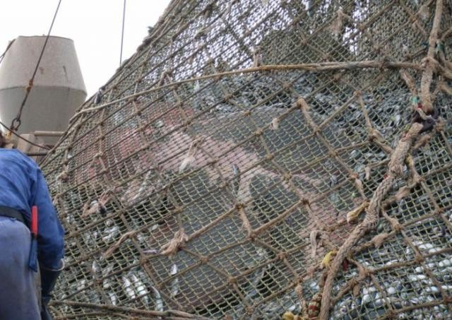 Кто попался в сети рыбаков (8 фото)