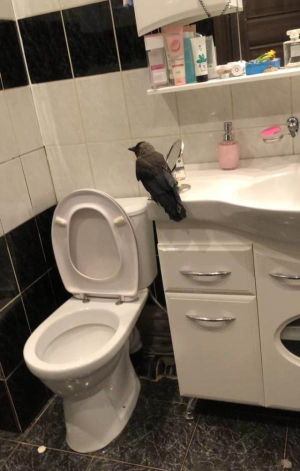 Неожиданная находка в ванной (2 фото)
