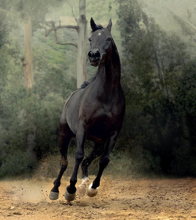 Фотографии лошадей (20 фото)