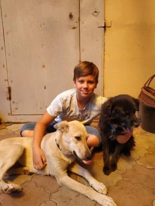 Мальчик своими силами собрал деньги на лечение больной собаки (3 фото)