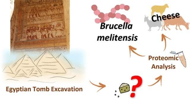 """В древней египетской гробнице был найден """"самый старый сыр (8 фото)"""