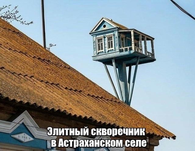Подборка прикольных фотографий (50 фото)