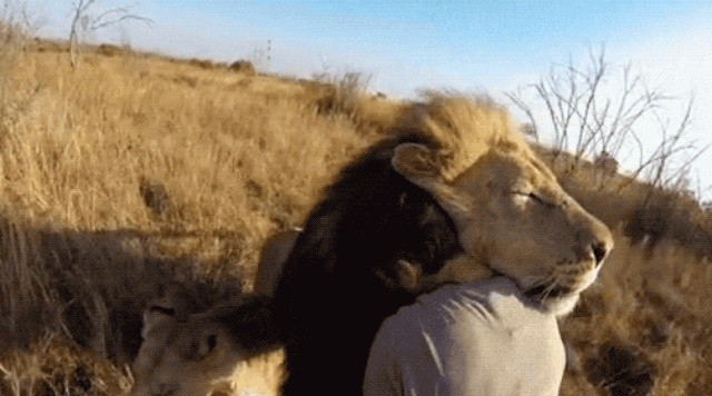 Позитивные и умилительные гифки с животными (13 гифок)